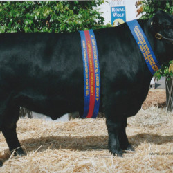 2010 Royal Sydney Show - Rotherwood Diablo