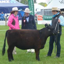 2015 Canterbury - Ashmore Chantilly -Yearling Heifer