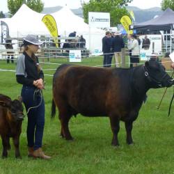 2015 Canterbury - Woolstone Park Jessie - Senior Cow