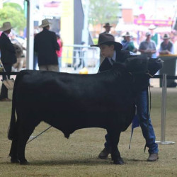 2016 Royal Sydney Show - Harry Turnham