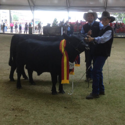 2016 Royal Sydney Show - Harry Turnham with Wanamara Tom Collins