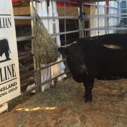 Beef 2015 Rockhampton