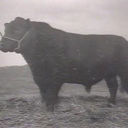 BraveEdward Glencarnock (1929)