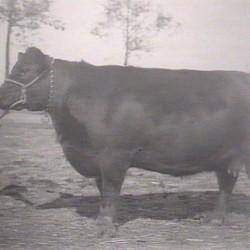 Glencarnock Elba 21st (1929)