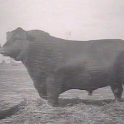 Glencarnock Revolution 6 (1929)