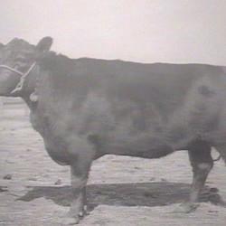 Karama of Glencarnock 4th (1929)