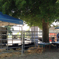 SRPG at Lardner Park Beef Week 2014