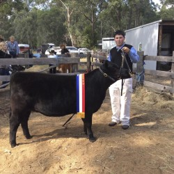Matt Cooney with his winning heifer
