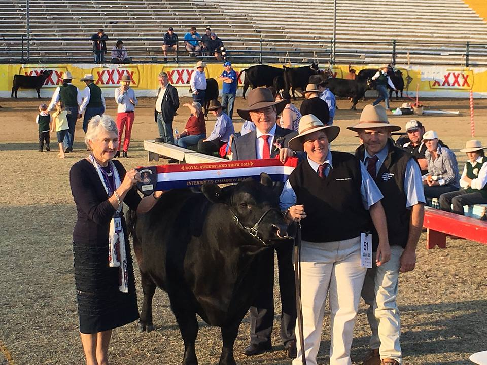 Tanview Jackaroo - Senior Bull, Grand Champion Bull & Small Breeds Interbreed Champion Bull