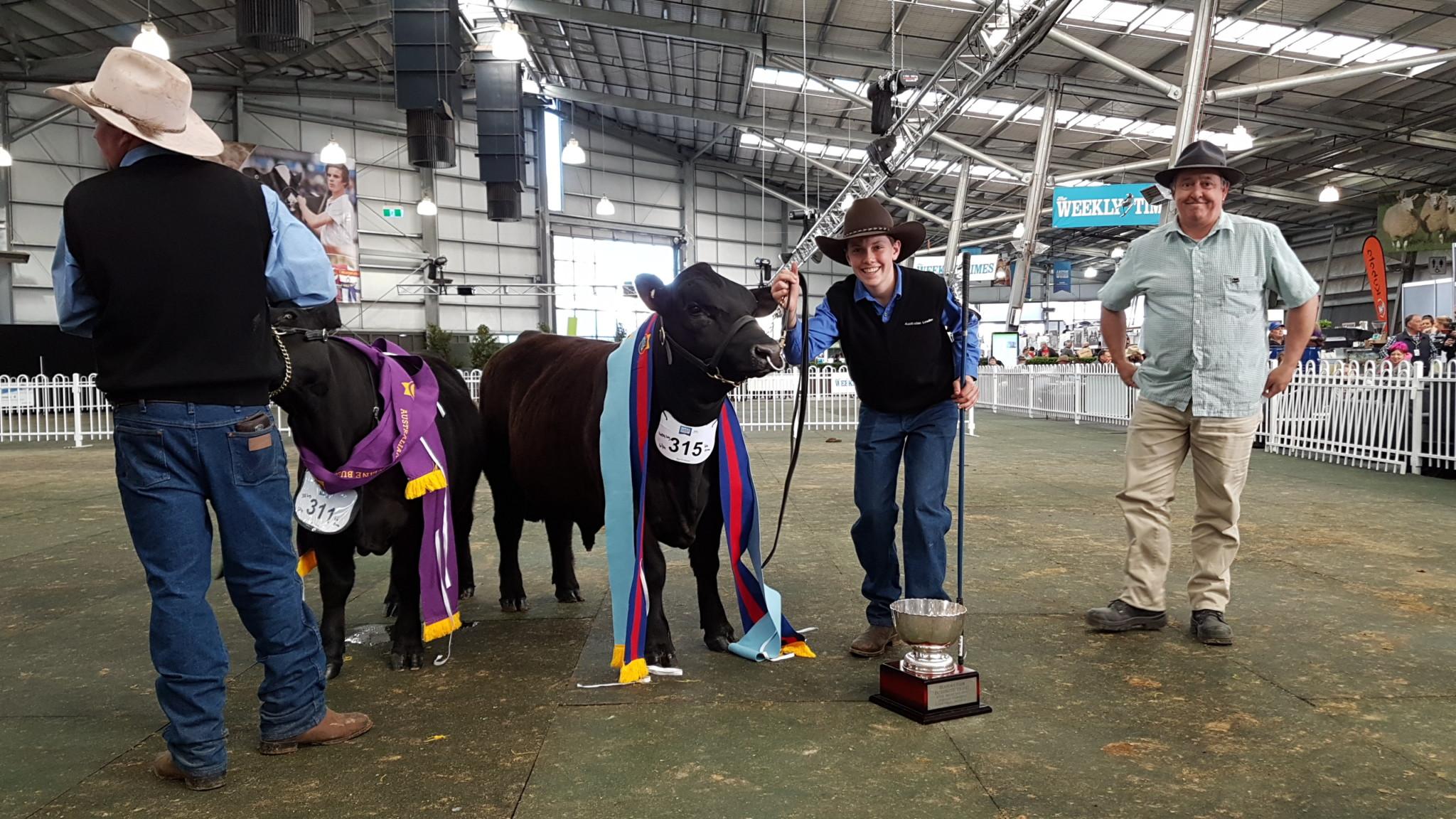 Harry Turnham with Junior Champion Bull, Wanamara Cavalier